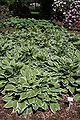 Rhododendronpark Bremen 20090513 134.JPG