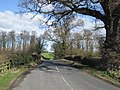 Road and Trees - geograph.org.uk - 371608.jpg
