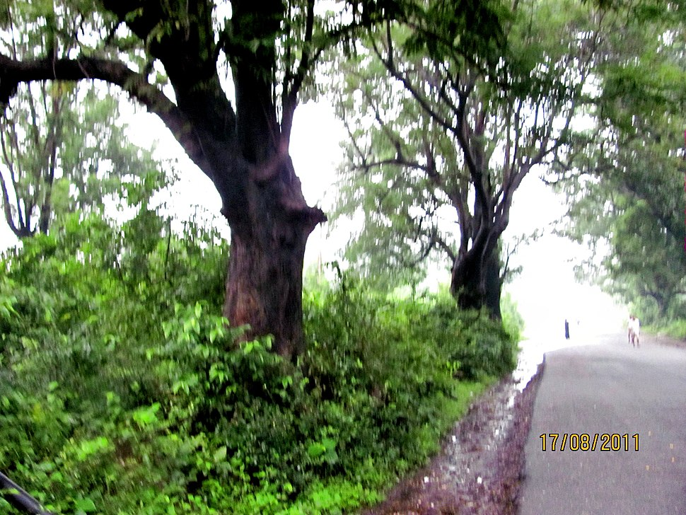 Road to Lilori Temple