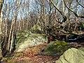 Rock and Wood - geograph.org.uk - 713884.jpg