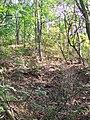 Rohožník reserve, Prague Dubeč.jpg