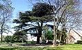 Roissy-en-France - Parc du Cedre 01.jpg