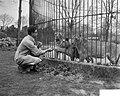 Roofdierenverzorger Frits Verbrugge gered in leeuwenkooi door collega Rudi Sitte, Bestanddeelnr 910-2777.jpg