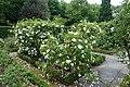 Roses @ Parc de Bercy @ Paris (34591984146).jpg