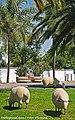 Rotunda das Ovelhas - Castro Verde - Portugal (11185998435).jpg