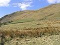 Rough grazing at Hallscaur - geograph.org.uk - 399757.jpg