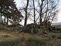 Ruin, Clashgour - geograph.org.uk - 330832.jpg