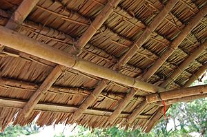Eugeissona - Roof thatched from palm leaves