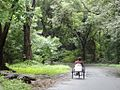 SGNP Maharashtra2.jpg