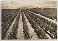 SLNSW 919948 Series 04 Fruit and vegetables ca 19211924.jpg