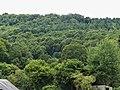 Saint-Sulpice-le-Guérétois vue sur forêt Chabrières depuis RD 914 (2).jpg