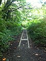 Saltwater State Park Trail.jpg