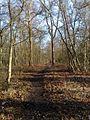 Sandringham path through woods - geograph.org.uk - 1149329.jpg
