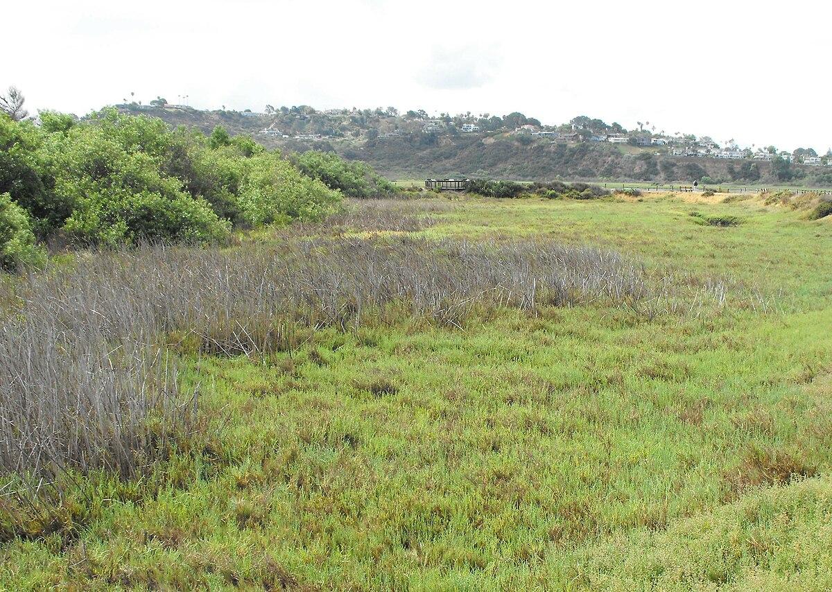 Brackish Marsh