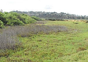 Brackish marsh - A brackish marsh section of San Elijo Lagoon in San Diego County, California