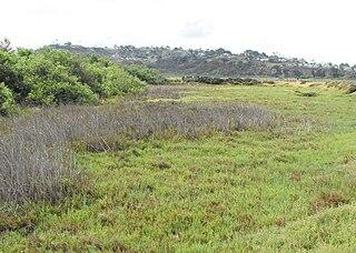 Brackish marsh Marsh with brackish level of salinity