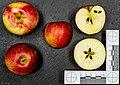 Sansa (apple) jm122105i.jpg