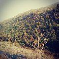 Satpura tiger reserve.jpg