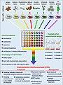 Schematic of environmental risk assessment using stem cells from marine invertebrates - 1-s2.0-S0048969720380967-ga1 lrg.jpg