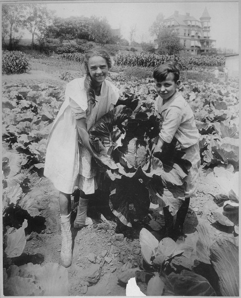 School children holding one of the large heads of cabbage raised in the War garden of Public School 88, Borough of Queen - NARA - 533646