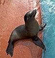Sea Lion 1 (5017610799).jpg