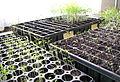 Seedtray4.jpg