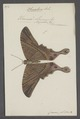 Sematura - Print - Iconographia Zoologica - Special Collections University of Amsterdam - UBAINV0274 059 01 0023.tif