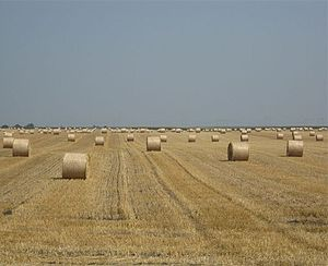 Semberija - Fields in Semberija