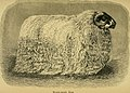 Sheep, breeds and management (1893) (14779570434).jpg