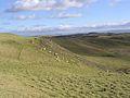 Sheep grazing at Alemoor Craig - geograph.org.uk - 340891.jpg