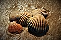 Shells and sand By G,Russ.jpg