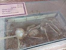استخوانهای سیلک