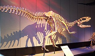 Metriacanthosauridae - Sinraptor dongi, Royal Tyrrell Museum