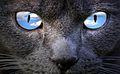 Sky eyes (4039252575).jpg