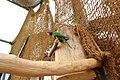 Slovenske Konjice (Mini Zoo Land) - ptiči 9.jpg