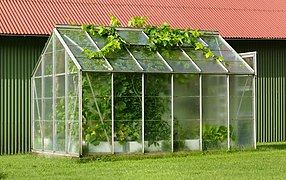 Small greenhouse with grapevines escaping.jpg