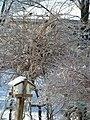 Snow tree birdhouse.jpg