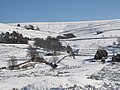 Snowy East Allen Dale at Ellershope near Spartylea - geograph.org.uk - 1734705.jpg