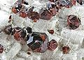 Spessartine-Feldspar-Group-170669.jpg