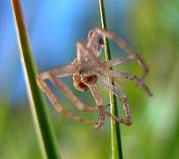 Spider-skin.jpg