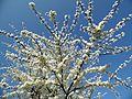 Spring - panoramio (52).jpg
