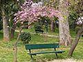Spring - panoramio - Tanya Dedyukhina (1).jpg