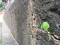 Sprout at mandir in parner.jpg