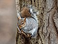 Squirrel in Prospect Park (22548).jpg