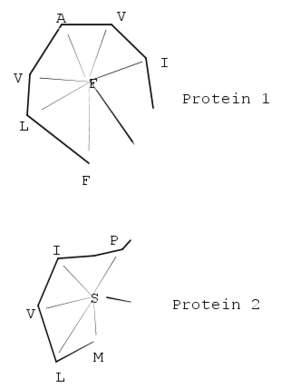 Structural alignment - Illustration of the atom-to-atom vectors calculated in SSAP. From these vectors a series of vector differences, e.g., between (FA) in Protein 1 and (SI) in Protein 2 would be constructed. The two sequences are plotted on the two dimensions of a matrix to form a difference matrix between the two proteins. Dynamic programming is applied to all possible difference matrices to construct a series of optimal local alignment paths that are then summed to form the summary matrix, on which a second round of dynamic programming is performed.