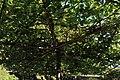 Stadtfriedhof Celle Laubengarten 7956.jpg