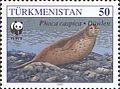 Stamps of Turkmenistan, 1993 - Caspian seal (Phoca caspica) on pebble beach.jpg