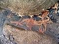 Starfish at Hilbre Island - geograph.org.uk - 217930.jpg