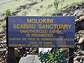 Starr-021108-0058-Nicotiana glauca-habitat-Molokini-Maui (24470865091).jpg
