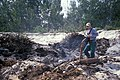 Starr-990514-0760-Tetragonia tetragonioides-Being burnt with Forest-Sand Island-Midway Atoll (24231227420).jpg